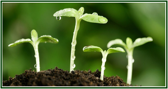 raja-ioga-na-parabola-do-semeador-com-mold
