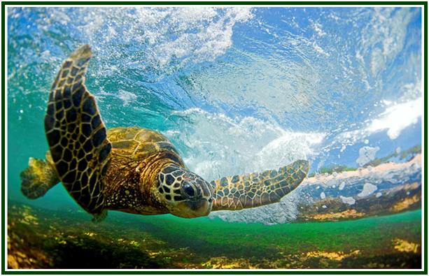 um-elogio-a-tartaruga-com-mold
