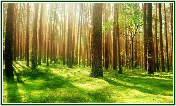 A Magia das Árvores__