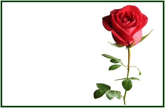 A Rosa de Paracelso COM MOLD