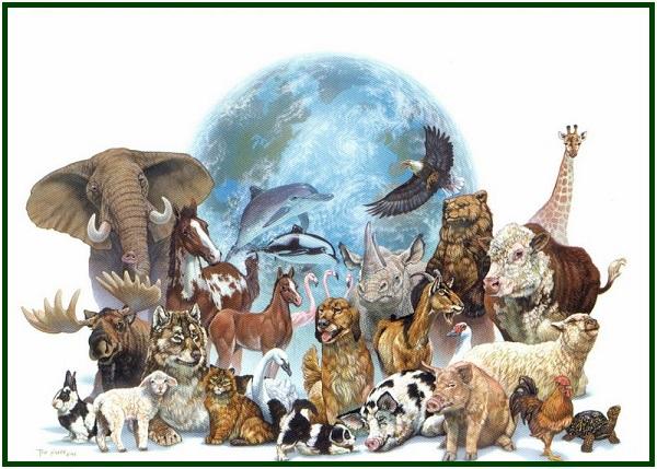 por-que-os-animais-sofrem-pergunta-com-mold